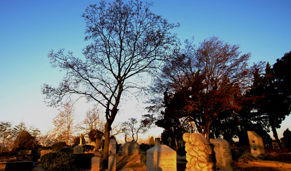 Yanghwajin Foreign Missionary Cemetery ,Cover Image